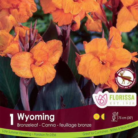 Canna Bronze Wyoming Orange Spring Bulb