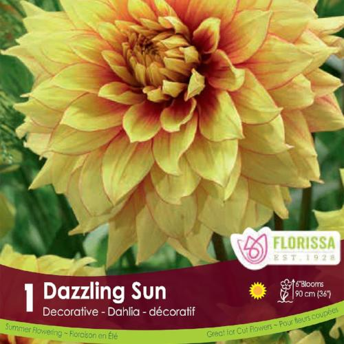 Dahlia Decorative Dazzling Sun Yellow Spring Bulb