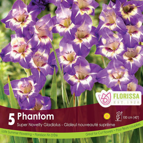Gladiolus US Novelty Phantom Purple Spring Bulb