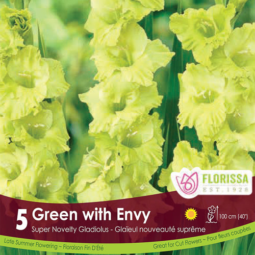 Gladiolus Novelty Green with Envy Spring Bulb