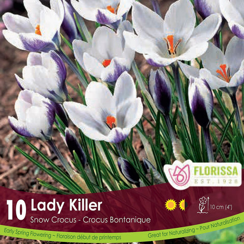 Snowcrocus Lady Killer