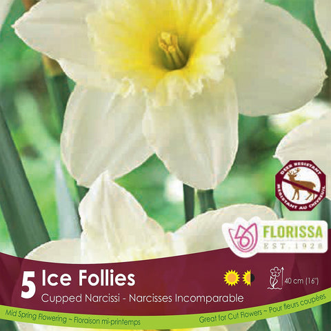 Narcissus Ice Follies Cream Yellow