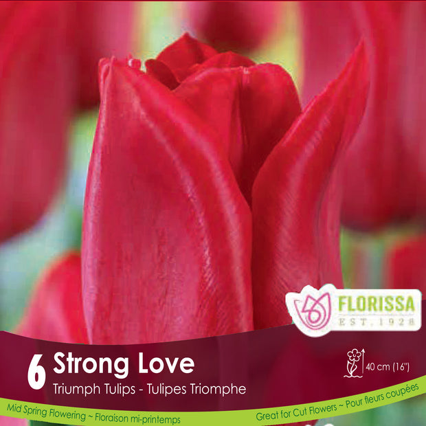 Red Triumph Tulip Strong Love