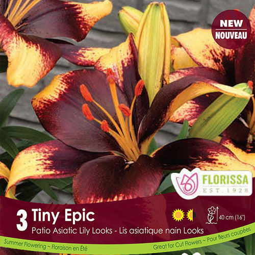 Patio Asiatic Lily Tiny Epic Spring Bulb