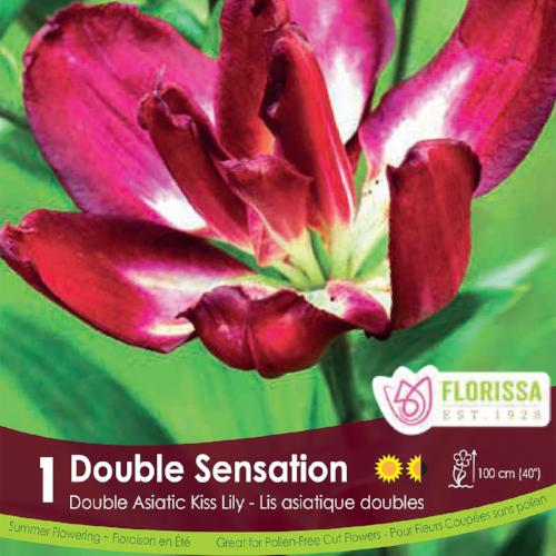 Lily Kiss Double Sensation Pink Spring Bulb