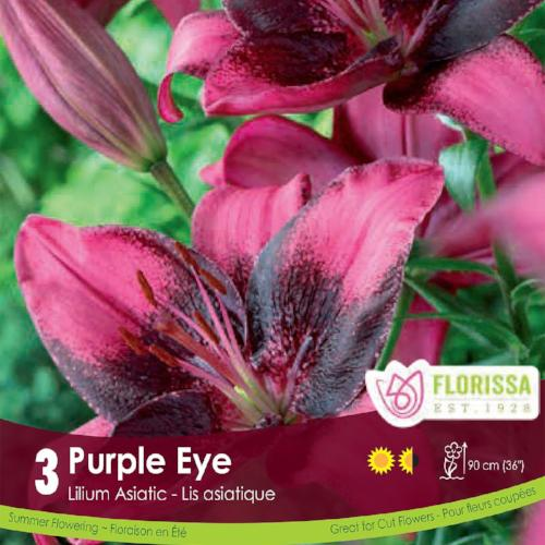 Lily Asiatic Purple Eye Purple Spring Bulb