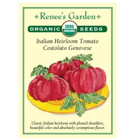 Italian Heirloom Tomato - Costoluto Genovese