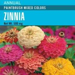 Zinnia Paintbrush Mixed Pink Red White Colours - Cornucopia Seeds
