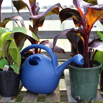 Blue Simply Elegant Watering Can - 2 Gallon