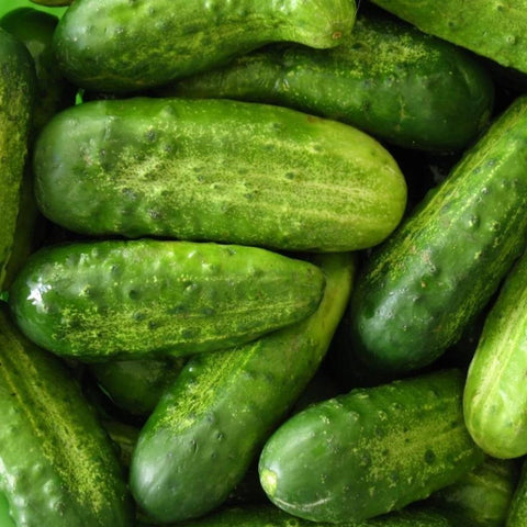 Cucumber Pickling - Metchosin Farm