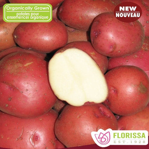 Chieftain Red Potatoes