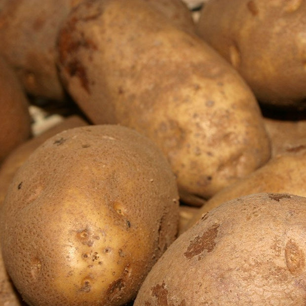 Potatoes Burbank Russet