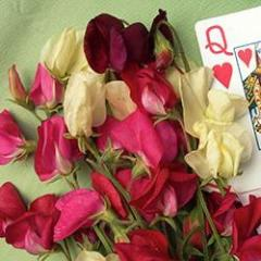 Sweet Pea Queen of Hearts - Renee's Garden