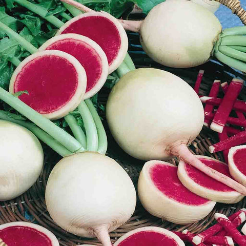 Radish Watermelon - McKenzie Seeds