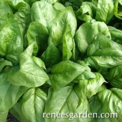 Spinach Regiment - Renee's Garden