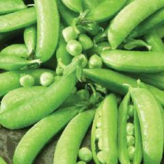 Pea Sugar Snap Pod - McKenzie Seeds