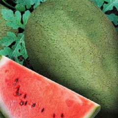 Watermelon Early Canada Improved - McKenzie Seeds
