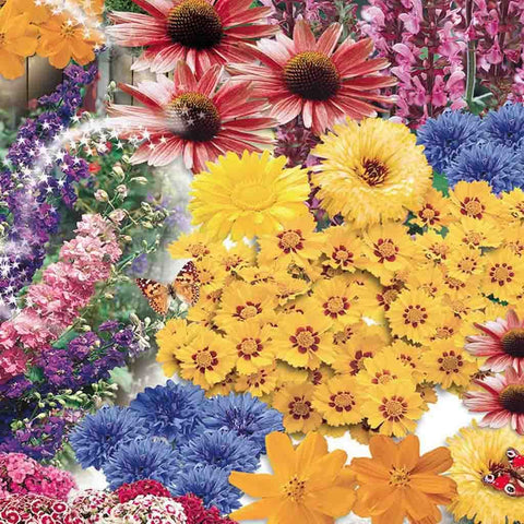 Wildflowers Butterfly Jumbo Pack - McKenzie Seeds