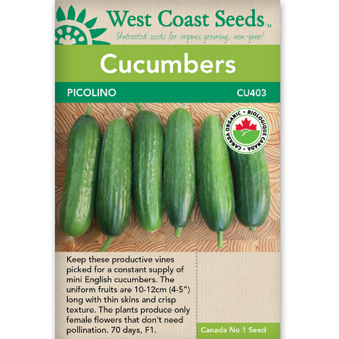 Cucumbers Picolino Organic - West Coast Seeds