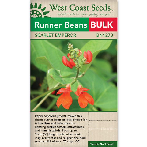 Beans Scarlet Runner Bulk - West Coast Seeds