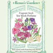 Fragrant Stock Ten Week Perfume - Renee's Garden Seeds