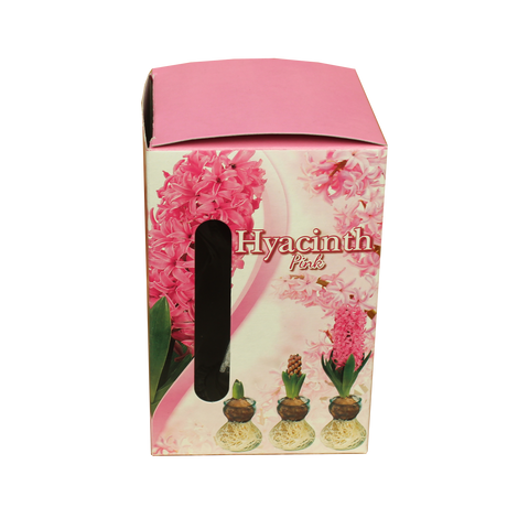Hyacinth With Glass Kit