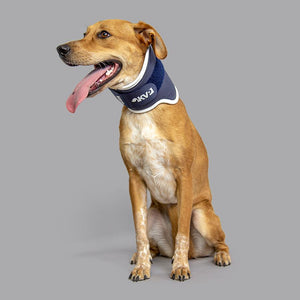 Balto® Neck – Rigid Neck Brace