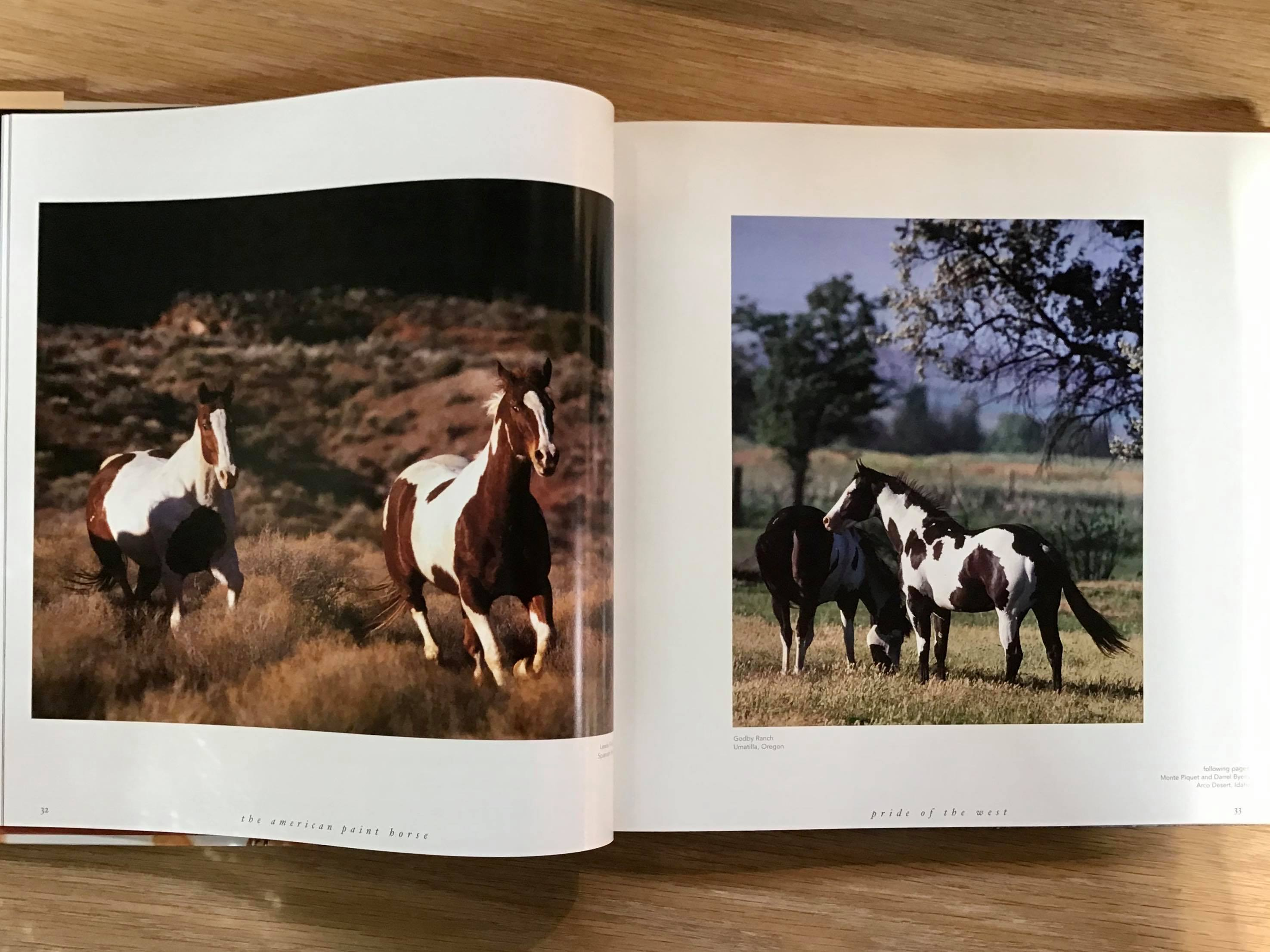 The American Paint Horse Book