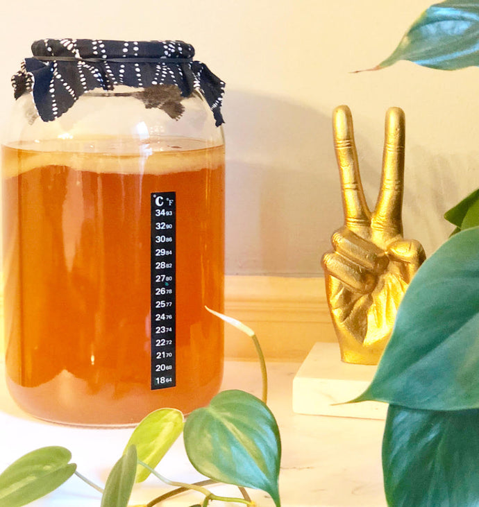 Stop & Start Brewing Kombucha - 3 Things to Do if you Need to Take a Break from Brewing Kombucha