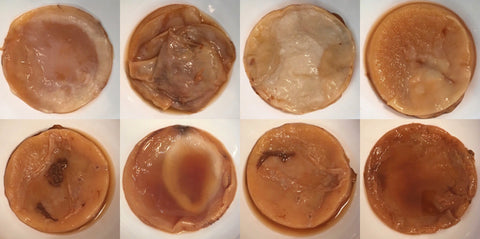 Photo of normal looking SCOBYS from brewing kombucha