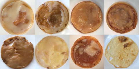 Photo of normal looking Kombucha SCOBYs