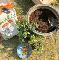 How to use kombucha SCOBYs in your garden.
