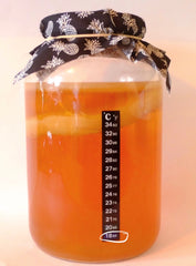 How cold temperature is bad for brewing kombucha.