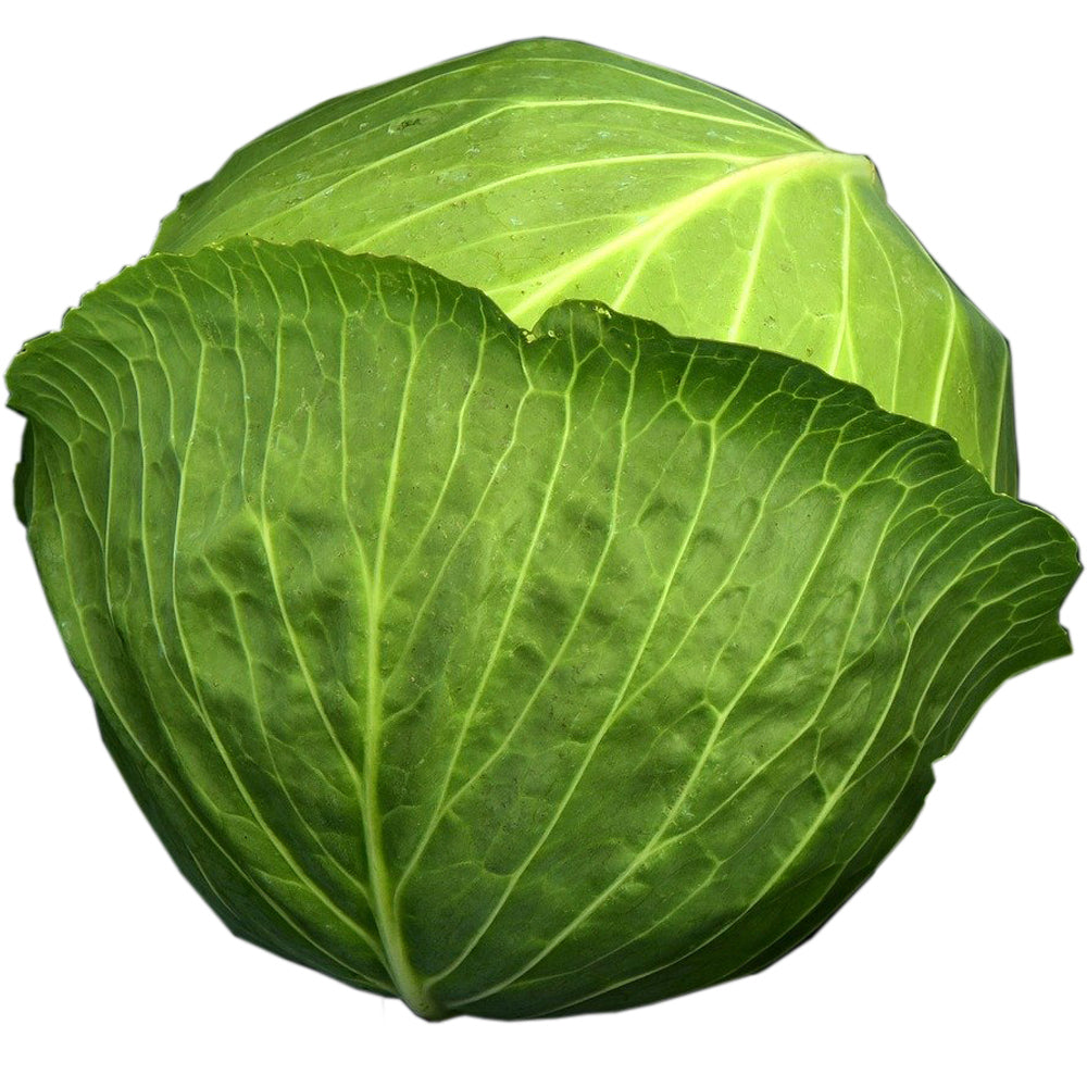 Green<br>Cabbage
