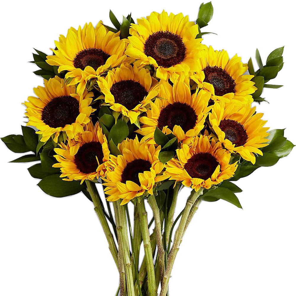 Sunflowers<br>Ten Extra Long Stems