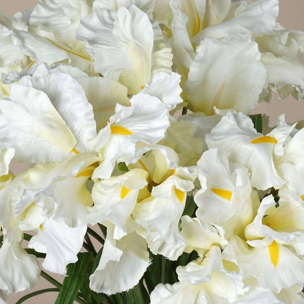 36 Large Iris Flowers-Cream