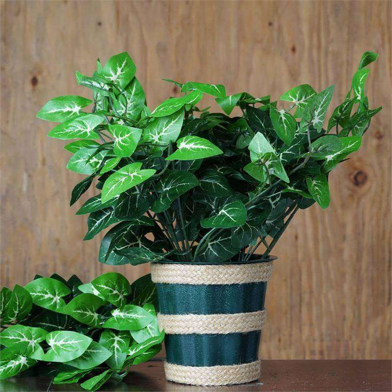 4 x IVY LEAGUE Bushes Nephytis Leaf Green