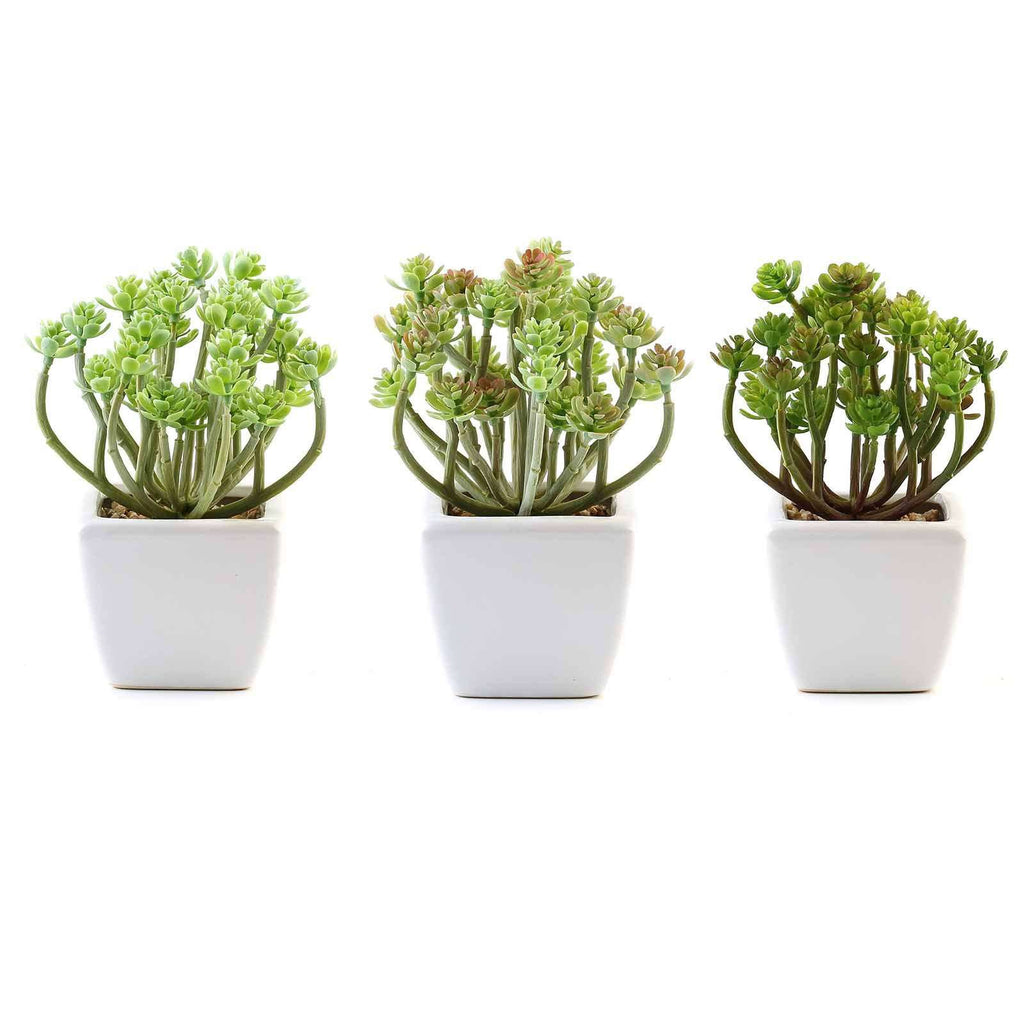 Set of 3 | 7'' Assorted Crassula Artificial Faux Succulent Air Plants in Ceramic Pot with Decorative Rocks
