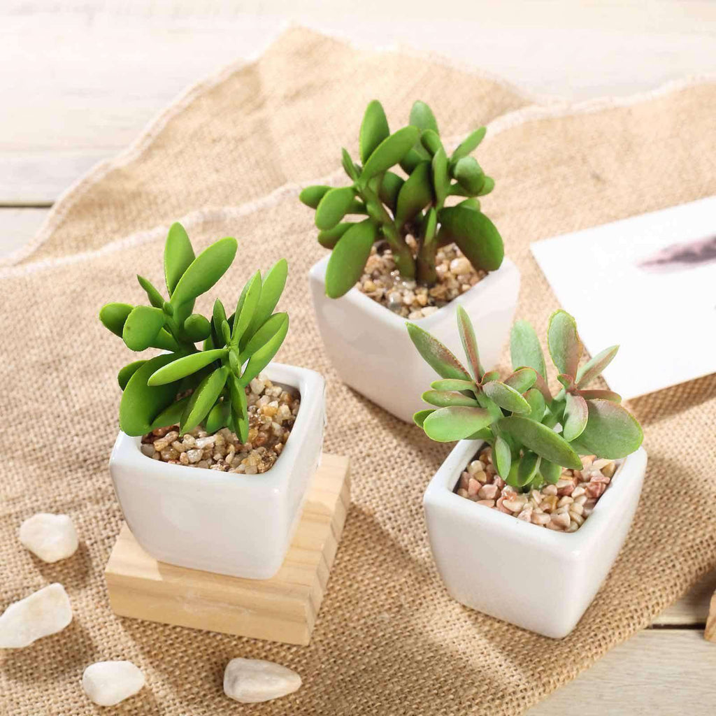 Set of 3 | 3'' Assorted Green Mini Artificial Faux Succulent Air Plants in Ceramic Pot with Decorative Rocks