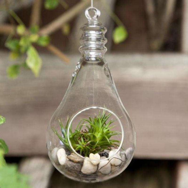 6 Pack Lightbulb Glass Terrarium Home Decor