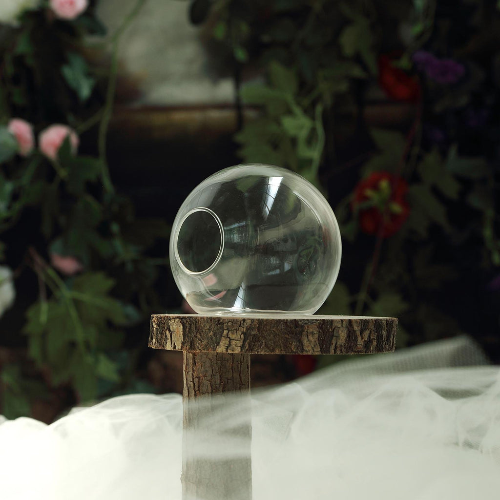 Set of 3 | Clear Small Round Shaped Glass Hanging Vases | Wall Mounted Terrariums