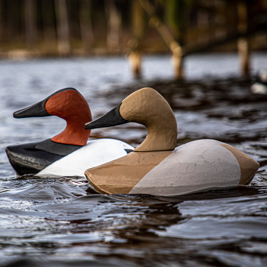Marsh Canvasback 6-pack