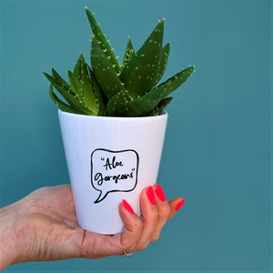 'Aloe Gorgeous' Ceramic Plant Pot