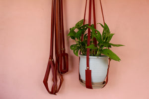 Belamy Leather Plant Hangers
