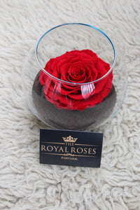Royal Eternity Rose - Vermelha