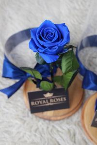 Royal Dome Blue