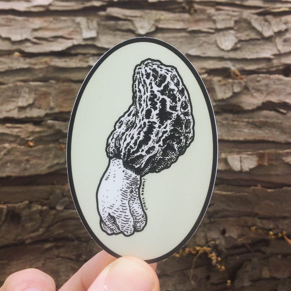 Oval Morel Sticker