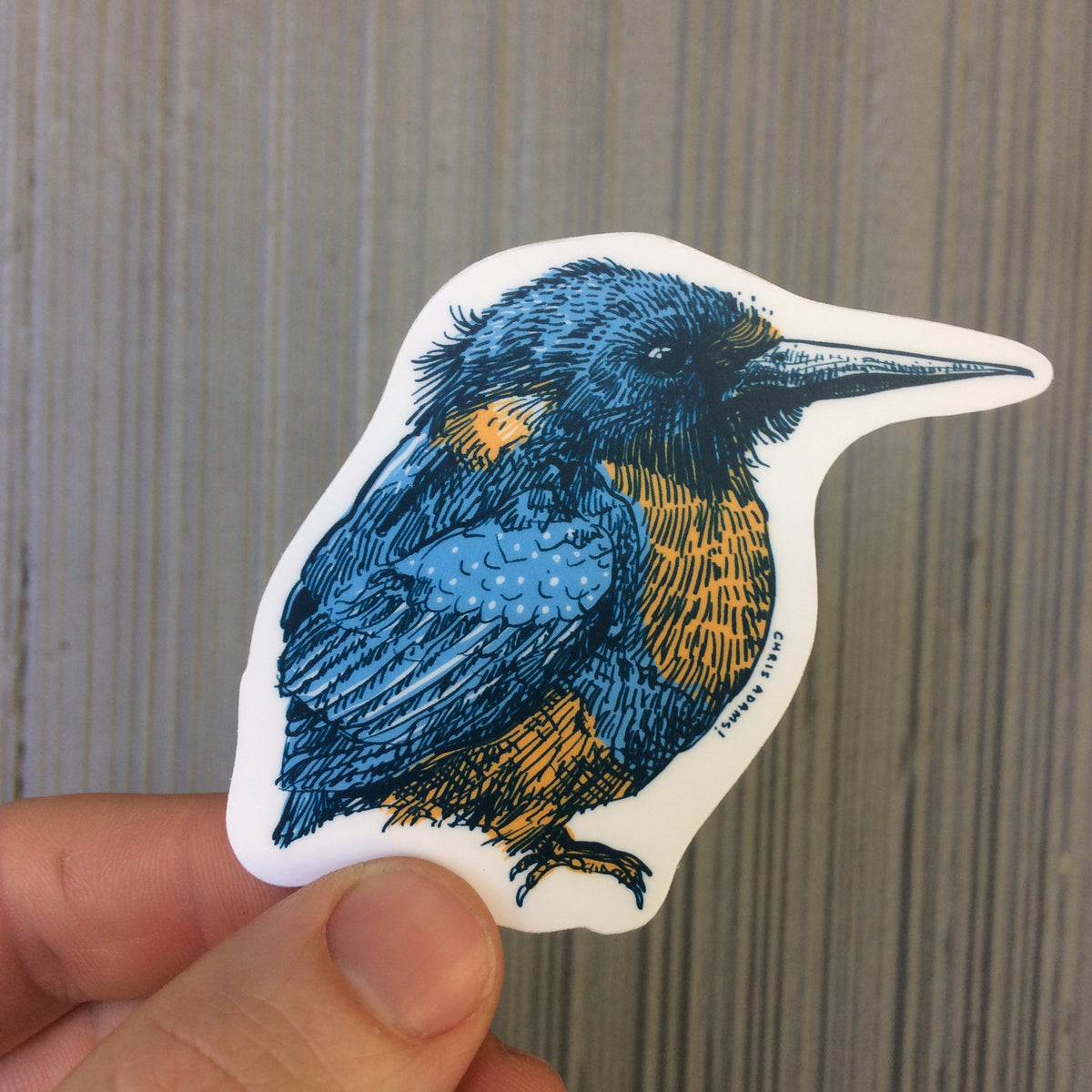 Common Kingfisher Sticker