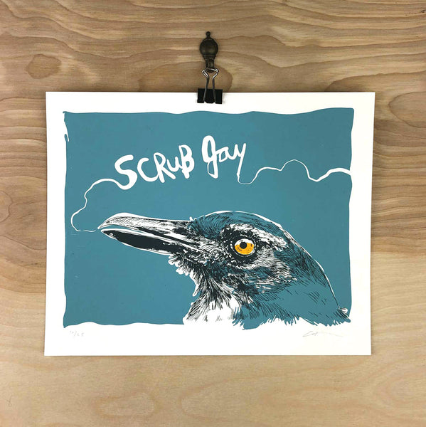 Scrub Jay 3 Color Limited Print