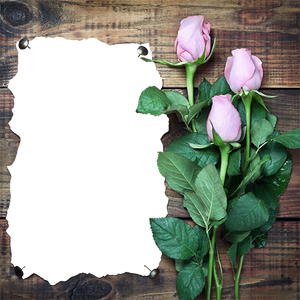 Bouqet of Roses on wood planks with area for photograph gift wrap design layout
